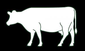 Uns ist es wichtig, dass das Tier erst geschlachtet wird, wenn es auch vollständig vermarktet ist. Deshalb zeigt dir hier unser Fortschrittsbalken an, wie viel Fleisch aktuell noch zur Verfügung steht. Wenn du dich für unsere hochwertiges und leckeres Weidefleisch entschieden hast, liegt dein Fleischpaket beim nächsten Abholtermin fix und fertig für dich verpackt bereit.